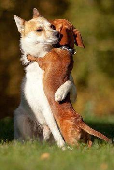 Hug me, brother. #CuteEmergency