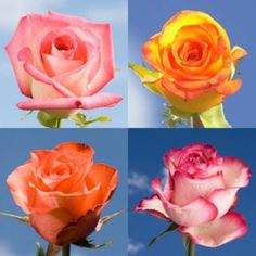 Multiple Colored Flowers | Global Rose