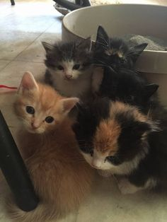 CATS ...looking for a good home Call....617 898 8916