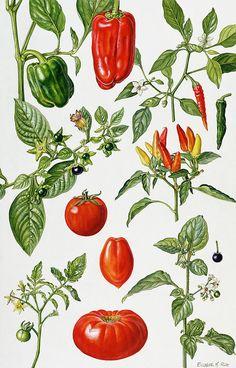 More tomato and pepper kitchen art