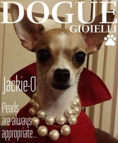 Vogue, funny, dog, style, pearls