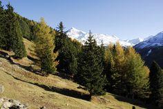 Stelvio National Park  http://lombardiaparchi.proedi.it/parco-nazionale-dello-stelvio-2/?lang=en