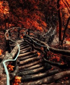 Abandoned stairs in a forest in West Virginia
