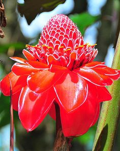 exotic+red+flowers | EXOTIC RED FLOWER