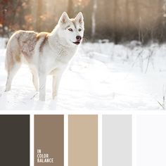 Free collection of color palettes ideas for all the occasions: decorate your house, flat, bedroom, kitchen, living room and even wedding with our color ideas. Skin Color Palette, Pastel Palette, Colour Schemes, Color Combos, Silver Living Room, Living Rooms, Wolf Colors, Silver Bathroom, Coffee Colour