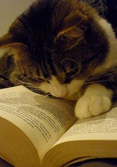 """""""According to this book, I cannot read!""""   My Favorite Things"""