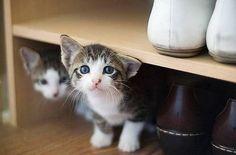 Kittens in shoe rack