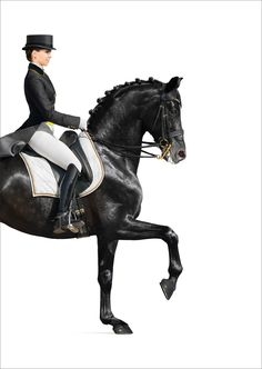 The Beauty of Dressage