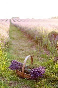 De schoonheid van laveldel