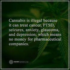 ★ℒ ★Medical Marijuana Legalize It, Regulate It, Tax It