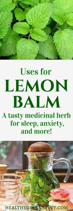 Natural Holistic Remedies Uses for lemon balm: Lemon balm is an amazing herb that deserves a place in your garden and herbal remedy arsenal. Healing Herbs, Medicinal Plants, Natural Healing, Holistic Healing, Herbal Plants, Herbal Tea, Natural Home Remedies, Herbal Remedies, Health Remedies