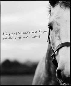 A dog may be man's best friend, but the #horse wrote history. #quote #equine