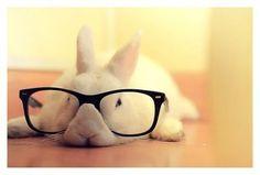 Nerdy Bunny.