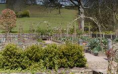 Arne Maynard's garden at Allt-y-Bela - Telegraph