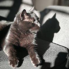 VERT CACTUS - THE CAT Cactus, Instagram, Animals, Animales, Animaux, Animal, Animais