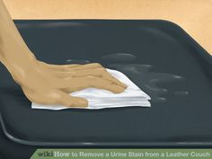 How To Get Pet Odor Out Of Leather Furniture Things To
