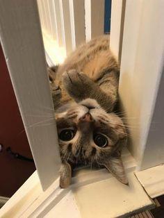 Imagens e Notícias da Internet: Fotos interessantes e engraçadas Vol. 1542 Cats, Animals, Gatos, Animales, Animaux, Cat, Animal, Kitty, Cats And Kittens