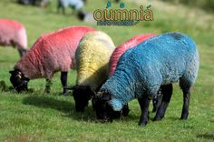 our wool comes in different colors