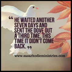 He waited another seven days and sent the dove out a third time. This time it didn't come back.(Genesis 8:12 MSG)  First we have the dove going forth from the ark and finding no rest upon the wild and drifting waste of sin and judgment. This represents the Old Testament period perhaps when the Holy Ghost visited this sinful world but could find no resting-place and went back to the bosom of God.  Next we have the dove going forth and returning with the olive leaf in her mouth the symbol and…