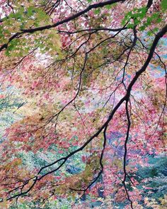 When the foliage looks like a dream... Photo: @omjsk, #RSlove)