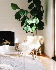 Cozy Fluffy Armchair, Big Plant And Pretty Light
