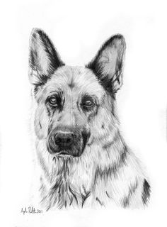 Rhina - German Shepherd by Loukya.deviantart.com on @deviantART