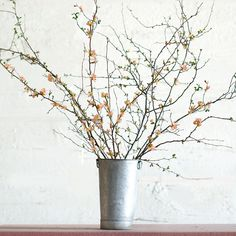 quince branches.