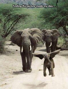 WELL I BE DONE SEEN ABOUT EVERYTHING WHEN U SEE AN ELEPHANT FLY