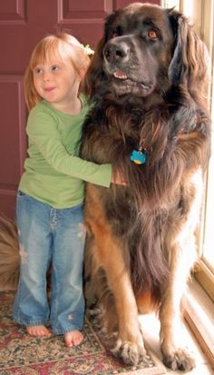 Adler, our Leonberger, and Maddy, our granddaughter in 2008; he loves her!