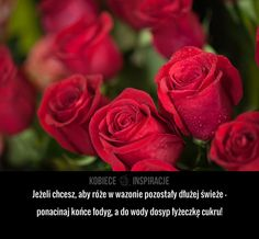 Jak prawidłowo dbać o róże?