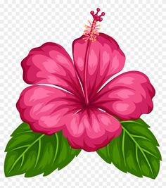 Best 12 Blue Tropical Flowers Png Clipart – Page 215469163408789817 Tropical Flowers, Hawaiian Flowers, Hibiscus Flowers, Exotic Flowers, Beautiful Flowers, Hibiscus Clip Art, Hibiscus Flower Drawing, Image Transparent, Deco Jungle