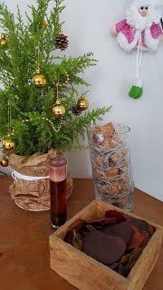 Morando com Amor #Natal #tuia #pinheiro #arvore