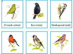 Třísložkové karty ptáků, které je možné pozorovat v krmítku Elementary Science, Birds, Education, Animals, January, Biology, Animales, Animaux, Bird