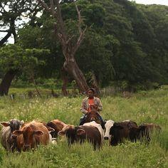 #Apure #Venezuela #Llanero #Llanos #ganado #vacas #cows #horseman #igersvenezuela #igersven #instamood #instahub #instacool