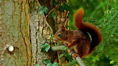 Es wird auch heute etwas Regen geben, ... sagte das Eichhörnchen im Garten. Leg mir Erdnüsse mit Schalen raus, dann werden die Nüsse nicht nass. Okay, mach ich ! :-)