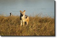 Hwange Zimbabwe, South Africa, Corgi, Wildlife, Park, Nature, Animals, Corgis, Naturaleza