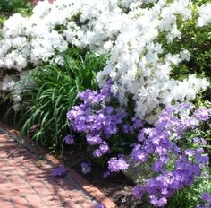 Best Food Photography Tips Front Garden Path, Garden Paths, Food Safety Tips, Food Tips, Bonsai, White Azalea, Best Food Photography, Starting A Garden, White Gardens