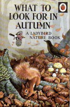 Buy WHAT TO LOOK FOR IN AUTUMN a Vintage Ladybird Book from the Nature Series 536 Matt Hardback 1967 There are many many things to look for in Autumn