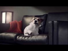 Dogs in slow motion