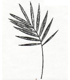 Unmounted caoutchouc Contexte Stamp - Sentry Palm