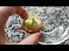 Soğan evde kendinden üretme -Kendinden yetişen bitkiler 3 -Regrow onion