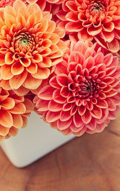 dahlias, my favorite flowers