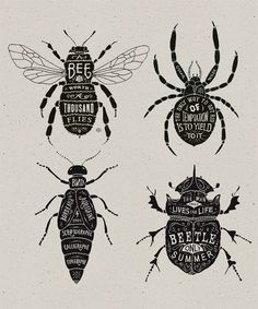 insect illustration and typography // animal, illustration, animal illustrations, design, graphic design Type Illustration, Animal Illustrations, Graphic Art, Graphic Design, Insect Art, Hand Type, Typography Design, Typography Inspiration, Word Art