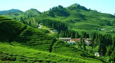Eastern Nepal Tour Packages,Tourist Place in Eastern Nepal,Holiday Packages Romantic Destinations, Amazing Destinations, Luxury Landscaping, Landscaping Rocks, Nepal Trekking, Adventure Tours, Greatest Adventure, Hill Station, Natural Scenery