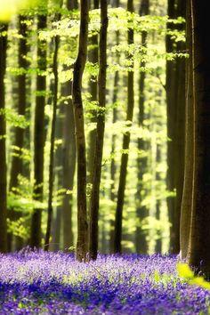 syflove:  pretty spring wood