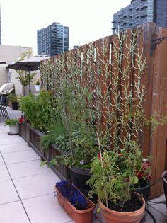 "My wall of vitra algue as ""evergreen"" trellis"
