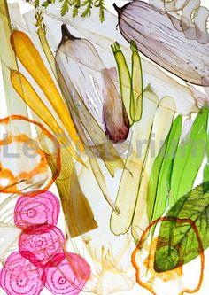 the ortodimichelle: vegetable Transparencies