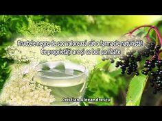 Fructele Negre De Soc Valoreaza Cat O Farmacie Naturista! Ce Proprietati Si Ce Boli Combat - YouTube Youtube, Food, Health, Plant, Youtubers, Meals, Youtube Movies