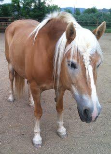 Cinnamon Girl - Hearts & Horses