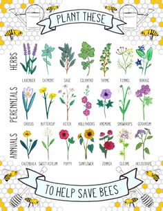 "johndarnielle: "" byhannahrosengren: "" Plant These To Help Save Bees: 21 Bee-Friendly Plants. Learn more here! "" you could really plant these in any vacant lot if you didn't get caught, the ones on..."